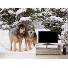 Фотообои Волки в снегу
